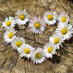 Meillä kaikilla on vain yksi sydän - muista pitää siitä hyvää huolta!