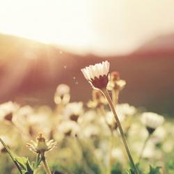 Kasvien avulla huoneilmaa paremmaksi!