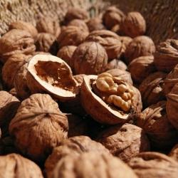 Tiesitkö, että saksanpähkinöitä kannattaa syödä joka päivä?